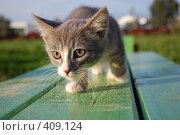 Купить «Котёнок крадётся по лавочке», фото № 409124, снято 8 августа 2008 г. (c) Никонор Дифотин / Фотобанк Лори