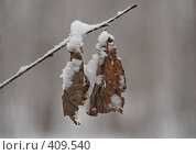 Купить «Зимовать», фото № 409540, снято 18 февраля 2019 г. (c) Забалуев Игорь Анатолич / Фотобанк Лори