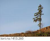 Купить «Одинокое дерево», фото № 413260, снято 10 сентября 2006 г. (c) Назаренко Ольга / Фотобанк Лори
