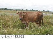 Купить «Корова», фото № 413632, снято 30 июля 2008 г. (c) Голофеева Галина / Фотобанк Лори