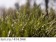 Купить «Бриллиантовая россыпь на траве», фото № 414944, снято 3 мая 2008 г. (c) Короткая Юлия / Фотобанк Лори
