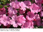 Цветы. Стоковое фото, фотограф Андрей Русаков / Фотобанк Лори