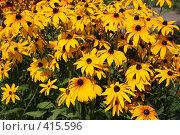 Жёлтые цветы. Стоковое фото, фотограф Андрей Русаков / Фотобанк Лори
