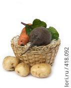 Купить «Овощи в корзине на белом фоне», фото № 418092, снято 16 августа 2008 г. (c) Коннов Леонид Петрович / Фотобанк Лори