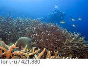 Купить «Подводный пейзаж», фото № 421880, снято 9 октября 2007 г. (c) Ольга Хорошунова / Фотобанк Лори