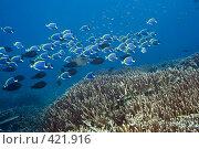 Купить «Подводный пейзаж», фото № 421916, снято 9 октября 2007 г. (c) Ольга Хорошунова / Фотобанк Лори