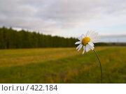 Купить «Одинокая ромашка на фоне осеннего сентябрьского поля», фото № 422184, снято 22 сентября 2007 г. (c) Василий Вишневский / Фотобанк Лори