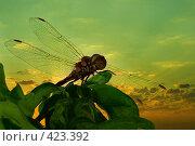 Купить «Лето-стрекоза», фото № 423392, снято 13 августа 2008 г. (c) Забалуев Игорь Анатолич / Фотобанк Лори