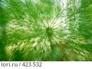 Купить «Зеленая вязь», фото № 423532, снято 15 августа 2008 г. (c) Дмитрий Рогов / Фотобанк Лори