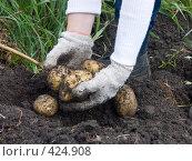 Купить «Русские национальные забавы. Копка картофеля», фото № 424908, снято 24 августа 2008 г. (c) Ирина Солошенко / Фотобанк Лори