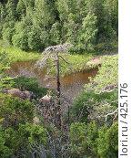 Купить «Валаамский берег, вид на залив, засохшая сосна», фото № 425176, снято 6 августа 2008 г. (c) Морковкин Терентий / Фотобанк Лори