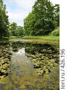 Купить «Пейзаж с заросшим прудом», фото № 426196, снято 19 сентября 2018 г. (c) Дмитрий Яковлев / Фотобанк Лори