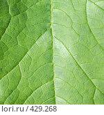Купить «Поверхность листа растения», фото № 429268, снято 23 августа 2008 г. (c) pzAxe / Фотобанк Лори