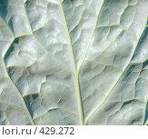 Купить «Поверхность листа растения», фото № 429272, снято 23 августа 2008 г. (c) pzAxe / Фотобанк Лори