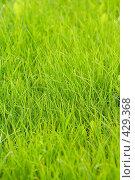 Купить «Зеленая трава, фон», фото № 429368, снято 22 августа 2008 г. (c) Михаил Павлов / Фотобанк Лори