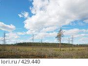Купить «Летний лес», фото № 429440, снято 23 августа 2008 г. (c) Катыкин Сергей / Фотобанк Лори