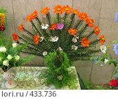 Купить «Цветущий папоротник», фото № 433736, снято 29 августа 2008 г. (c) Геннадий Соловьев / Фотобанк Лори