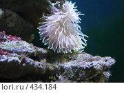 Купить «Аквариум в зоопарке», фото № 434184, снято 9 июня 2008 г. (c) Parmenov Pavel / Фотобанк Лори