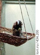 Купить «Игрунка», фото № 434200, снято 9 июня 2008 г. (c) Parmenov Pavel / Фотобанк Лори