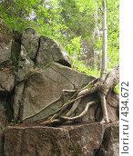 Купить «Корни и скалы. Выживание. Остров Валаам.», фото № 434672, снято 6 августа 2008 г. (c) Заноза-Ру / Фотобанк Лори