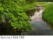 Купить «Пейзаж с заросшим прудом и веткой дуба», фото № 434740, снято 14 июня 2008 г. (c) Дмитрий Яковлев / Фотобанк Лори