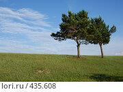 Купить «Две сосны», фото № 435608, снято 27 июня 2008 г. (c) Виталий Попов / Фотобанк Лори