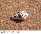 Ракушка на песке. Стоковое фото, фотограф Артём Дудкин / Фотобанк Лори