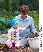 Купить «Бабушка и внучка перебирают картофель», фото № 435952, снято 31 августа 2008 г. (c) Ирина Солошенко / Фотобанк Лори