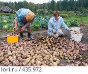 Купить «Сортировка картофеля. Русские национальные забавы», эксклюзивное фото № 435972, снято 31 августа 2008 г. (c) Ирина Солошенко / Фотобанк Лори