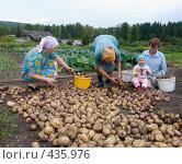 Купить «Сортировка картофеля. Русские национальные забавы», эксклюзивное фото № 435976, снято 31 августа 2008 г. (c) Ирина Солошенко / Фотобанк Лори