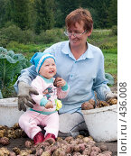 Купить «Бабушка и внучка перебирают картофель», фото № 436008, снято 31 августа 2008 г. (c) Ирина Солошенко / Фотобанк Лори