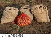 Купить «Урожай», фото № 436692, снято 1 сентября 2008 г. (c) Михаил Николаев / Фотобанк Лори