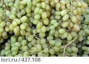 Купить «Виноград», фото № 437108, снято 29 февраля 2020 г. (c) Коннов Леонид Петрович / Фотобанк Лори