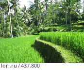 Рисовые террасы (2007 год). Стоковое фото, фотограф Артём Дудкин / Фотобанк Лори