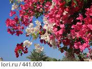 Купить «Цветы», фото № 441000, снято 9 августа 2008 г. (c) Марина / Фотобанк Лори