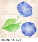 """Купить «Коллаж - ипомея в стиле """"ботаническая иллюстрация"""", на фоне старой бумаги, с подписью """"викторианским"""" почерком -  """"Ipomoea""""», иллюстрация № 441824 (c) Tamara Kulikova / Фотобанк Лори"""