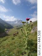 Купить «Экзотический цветок на фоне гор», фото № 444508, снято 8 августа 2008 г. (c) Антон Щербина / Фотобанк Лори