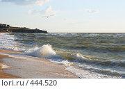 Купить «Морской берег», фото № 444520, снято 10 июля 2008 г. (c) Юрий Брыкайло / Фотобанк Лори