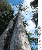 """Купить «""""Были когда-то и вы рысаками..."""" Сухое дерево», фото № 445040, снято 6 августа 2008 г. (c) Заноза-Ру / Фотобанк Лори"""