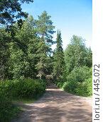 Купить «Валаамская дорога. Двурогая ель.», фото № 445072, снято 6 августа 2008 г. (c) Заноза-Ру / Фотобанк Лори