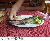 Купить «Болгарская кухня. Рыба форель», фото № 445708, снято 15 января 2005 г. (c) Борис Горбань / Фотобанк Лори