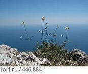Купить «Цветы на краю пропасти», фото № 446884, снято 4 августа 2007 г. (c) Артём Дудкин / Фотобанк Лори