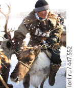 Купить «Забеги на оленях», фото № 447552, снято 4 марта 2006 г. (c) Ален Лагута / Фотобанк Лори