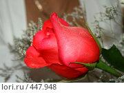 Купить «Роза», фото № 447948, снято 1 сентября 2008 г. (c) Людмила Пашкевич / Фотобанк Лори