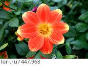 Купить «Георгины», фото № 447968, снято 5 сентября 2008 г. (c) Людмила Пашкевич / Фотобанк Лори