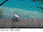 Купить «Кормление рыбы на Плитвецких озерах, Хорватия», фото № 451036, снято 16 августа 2008 г. (c) Pukhov K / Фотобанк Лори