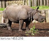 Купить «Носорог», фото № 453216, снято 28 августа 2008 г. (c) Юлия Бобровских / Фотобанк Лори