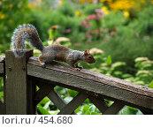 Купить «Белка на заборе», фото № 454680, снято 21 августа 2008 г. (c) Юлия Бобровских / Фотобанк Лори
