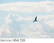 Свободная птица. Стоковое фото, фотограф Владислав Грачев / Фотобанк Лори