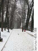 Купить «В парке Т.Шевченко (Киев)», фото № 459188, снято 27 января 2008 г. (c) Никончук Алексей / Фотобанк Лори